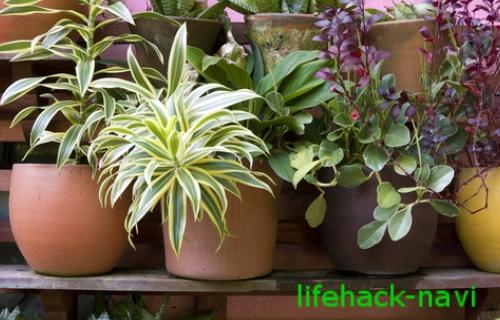 オフィス 乾燥 観葉植物