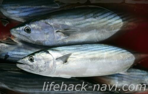 冷え性 改善 食べ物 魚